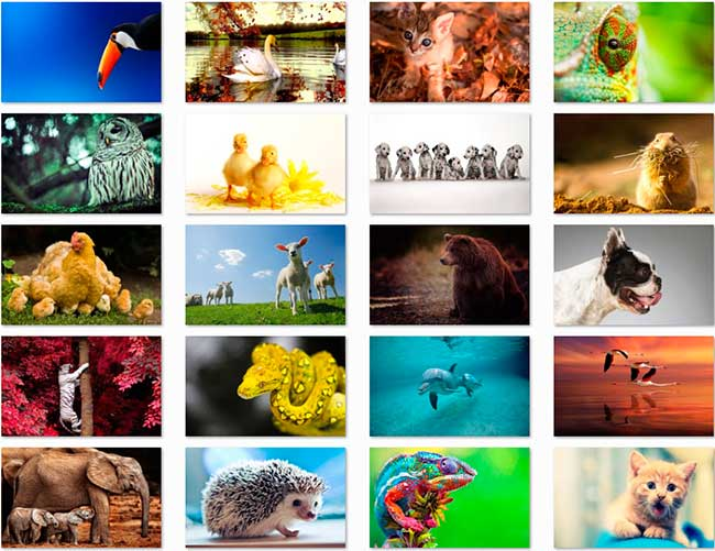 100 Animal HD Wallpapers papel de parede Preview 04 por Saltaalavista Blog