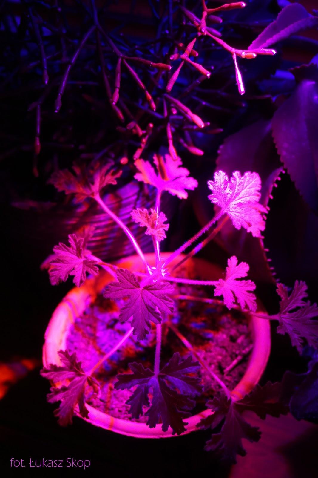 żarówki Led Do Roślin Wszystko O Doświetlaniu Kwiatów W
