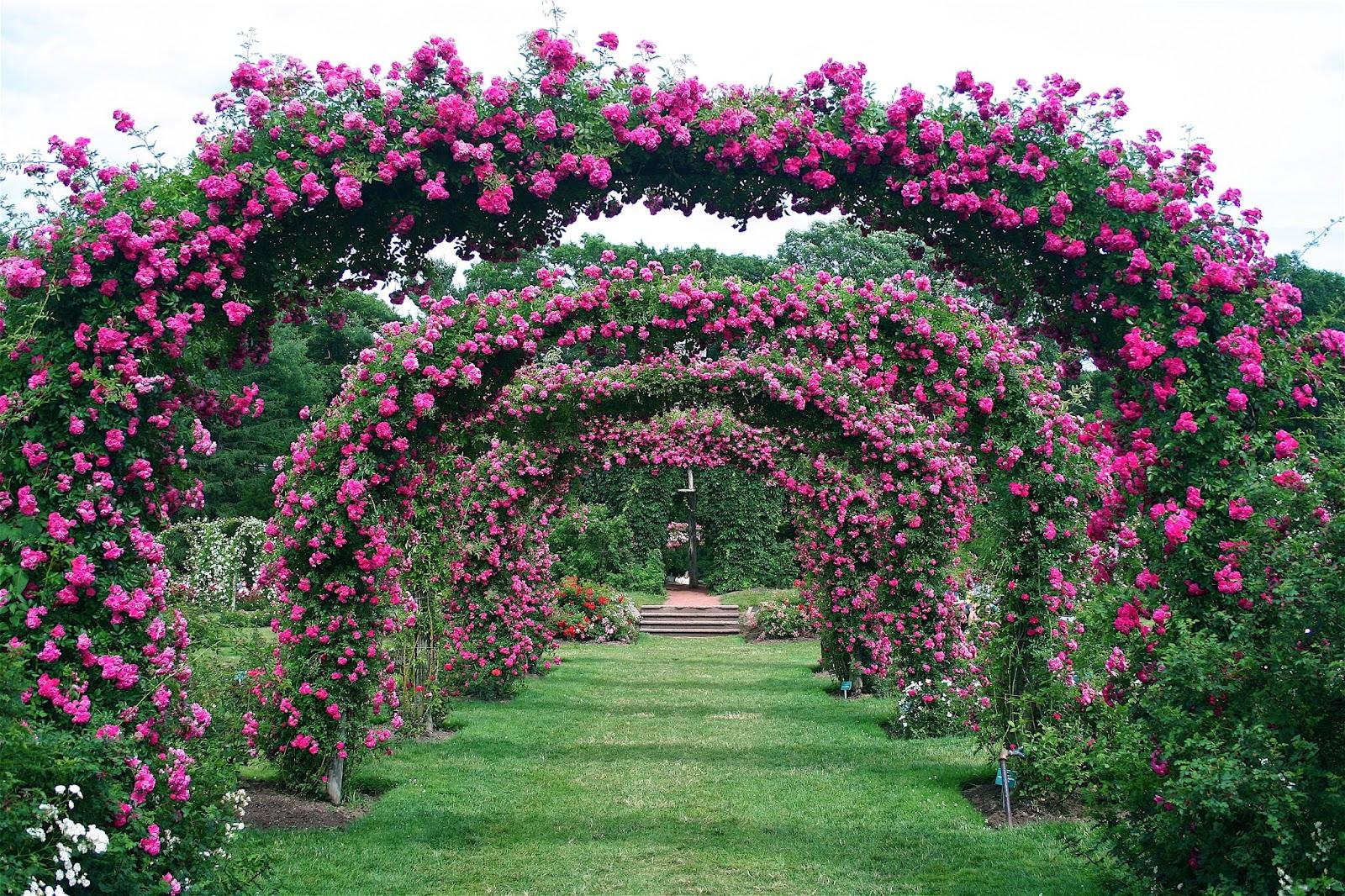 Roses In Garden: Design Megillah: Love Where You Live: Elizabeth Park