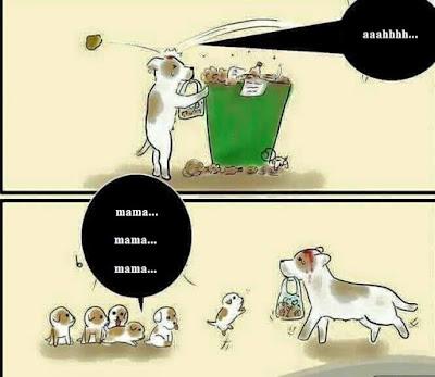 Hayvanlar Sokaklar