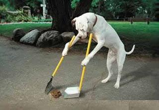 dog care  Sangue nas fezes do seu Cão Causas e Curas