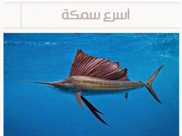 أسرع سمكة