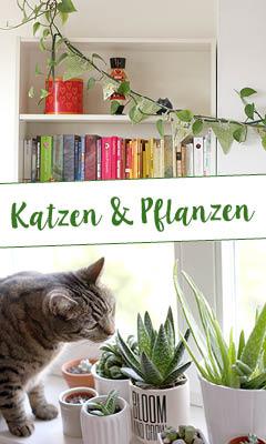 http://aentschie.blogspot.de/2015/07/pflanzen-und-katzen-kein-problem.html