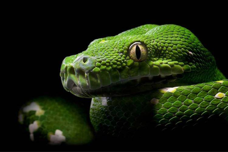 Wonderful Snakes Photography Through The Eyes Of Photographers