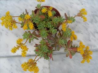 διάφορα λουλούδια όλα σε χρώμα κίτρινο που είτε γι άλλους σημαίνει μίσος αλλά για άλλους σεβασμός