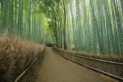 7 Hutan Terindah Yang Ada Di Dunia