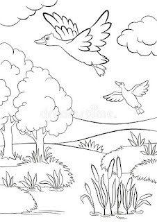 Printable Duck Migration Images And Photo Coloring Pages Animals