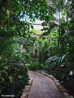 ścieżka w palmiarni