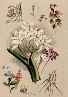 south australian botany