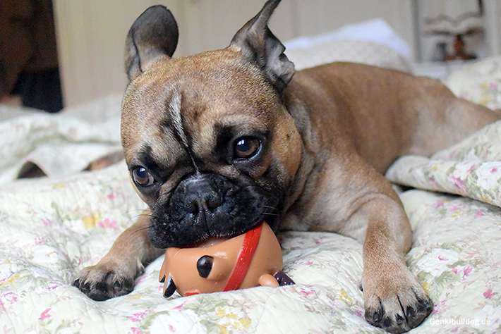 Weihnachtsgeschenk für Hunde
