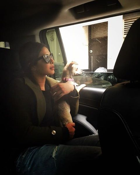 Priyanka-Chopra-in-National-Puppy-Day