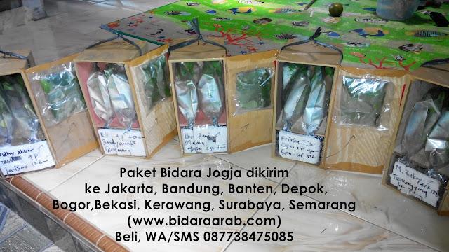 Pohon Bidara Dikirim Ke Jakarta