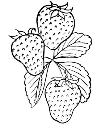 Gambar Mewarnai Buah Strawberry - 3