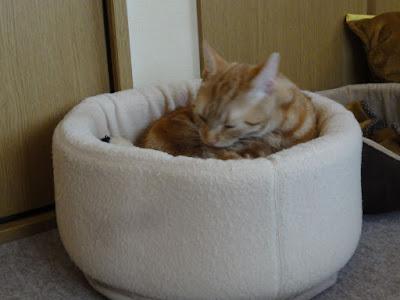 猫が湯呑み茶碗のようなクッションの中で毛づくろいをしています。