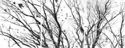 Katherine Kean, drawing, tress, branches, birds, triptych, graphite, small