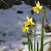 Danas nastupa proljeće, a u nedjelju počinje ljetno računanje vremena