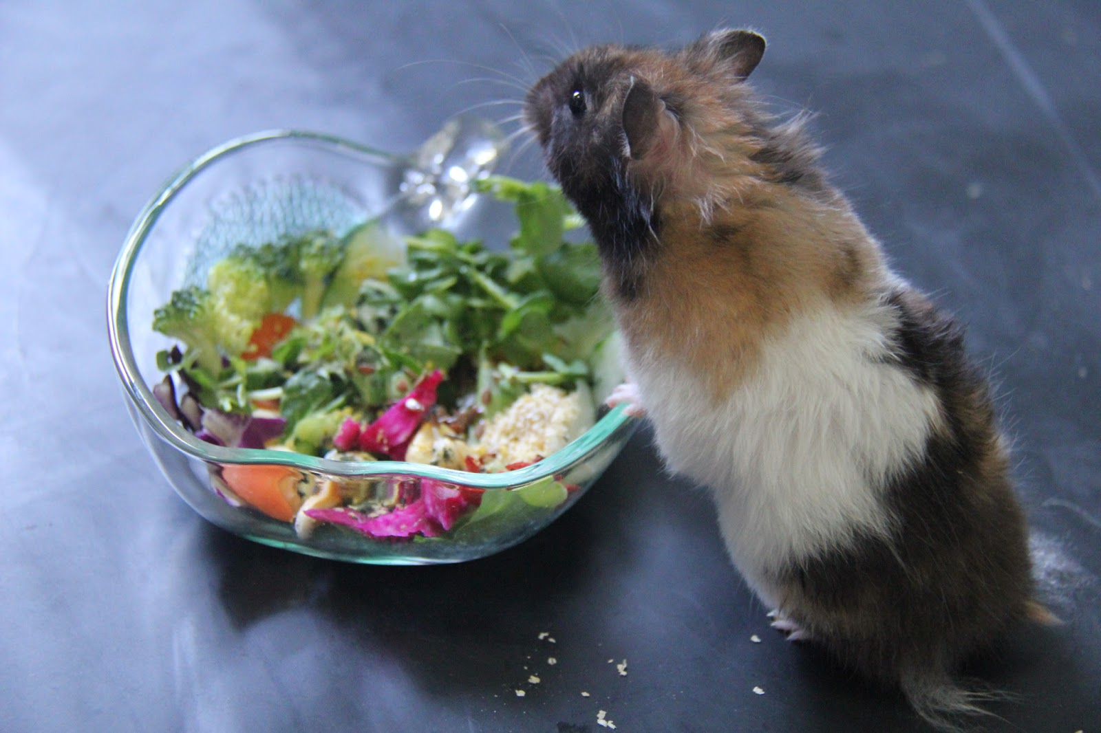 Ecotrition Organic Hamster Food