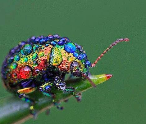 finest images of insects