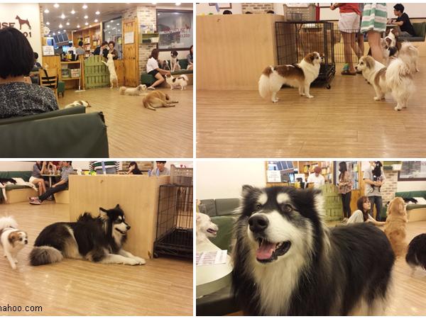 Hapjeong parissa tunnissa - Bau House-koirakahvila ja YG Entertainment