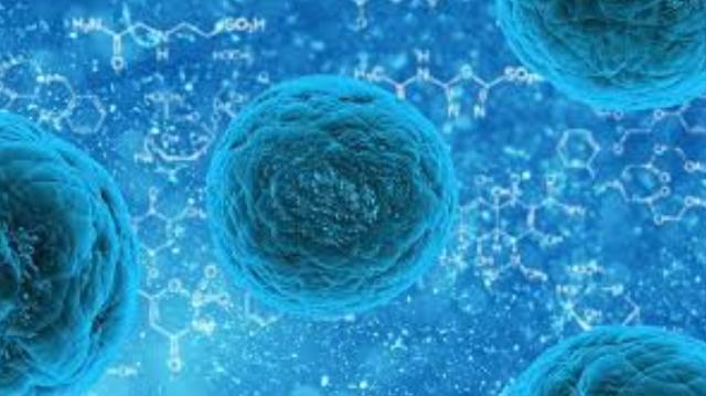 Apa yang Dimaksud Dengan Stem Cell, Dan Mengapa Peranannya Sangat Penting?