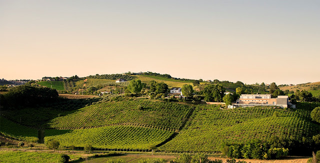 La Valentina vineyards