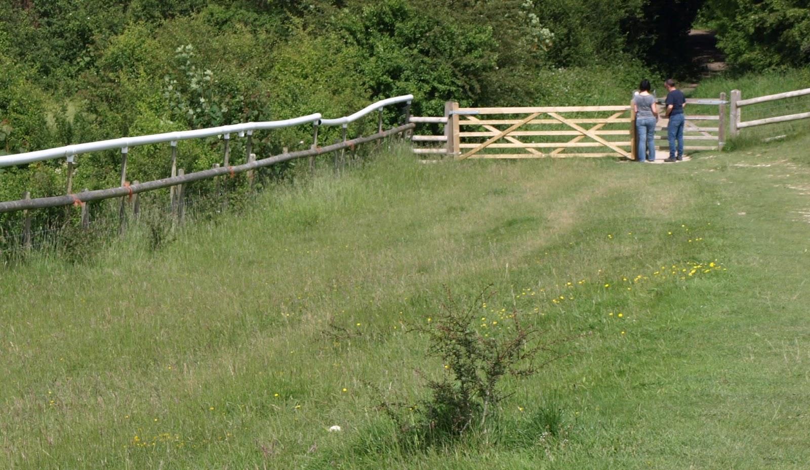 Badbury Rings Dog Walkers