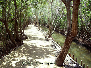 Mangleres Yucatan Reserva Ecologica