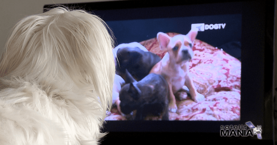 Frekuensi Terbaru Channel Dog TV di Satelit Intelsat 19