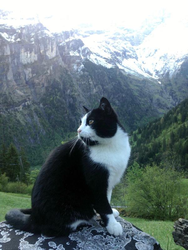 gimmelwald switzerland mountains