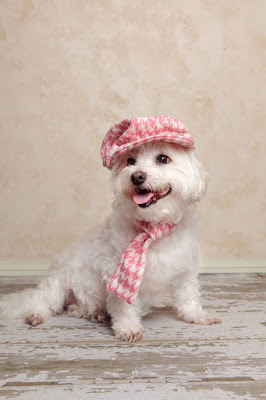 Cute little white dog in a pink houndstooth hat and scarf