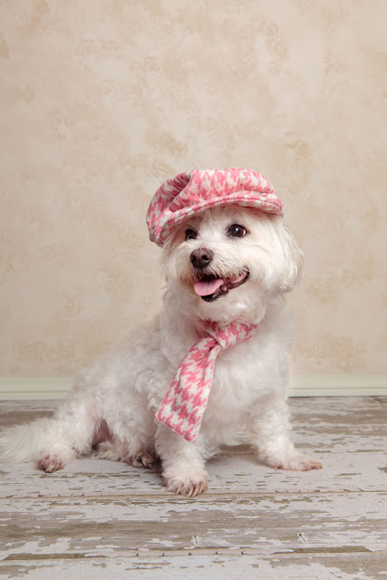 Little white dog in a pink hat and scarf, happy because of science on positive reinforcement and dog training