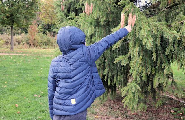 Boy picking pine cones in Reima Falk Winter Jacket