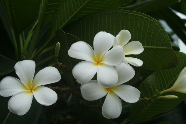 Pictures Of Beautiful Exotic Flowers