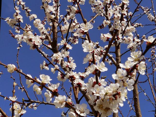 Wiosna, wiosna, wiosna.... - Czytaj więcej »