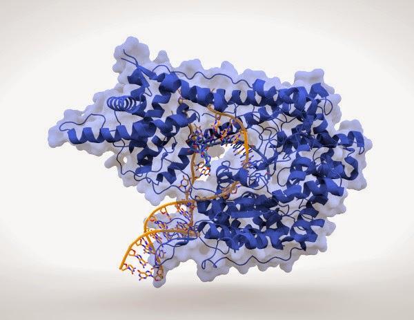 DNA Template, gen asing