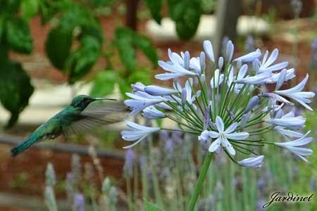 Flor lilás atrativa para beija-flores