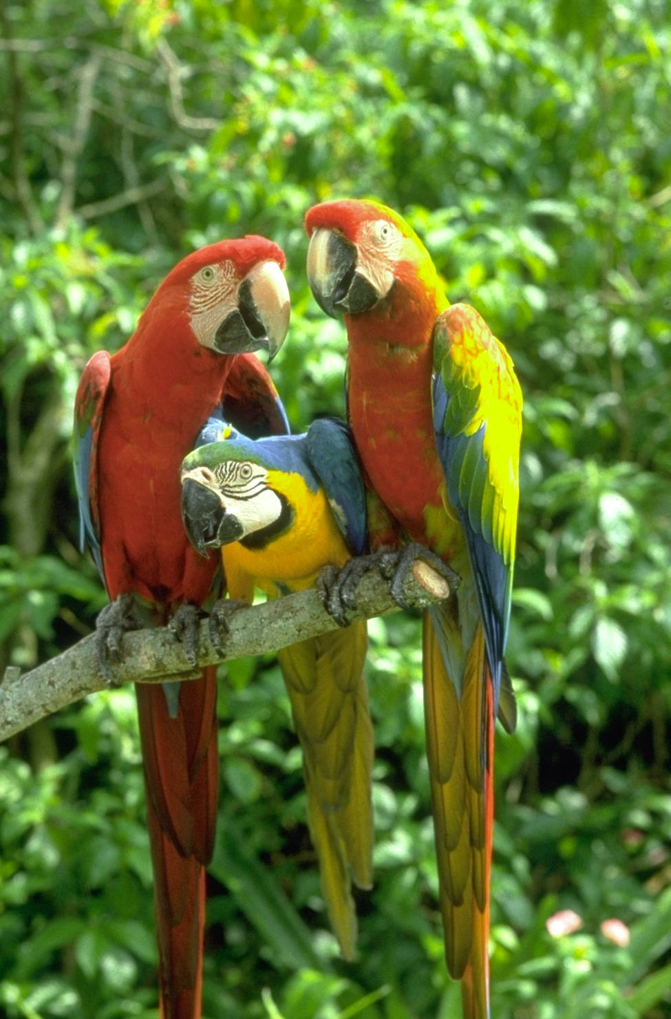 Beautiful Natural Colours Love Birds Photos, Free Download ...