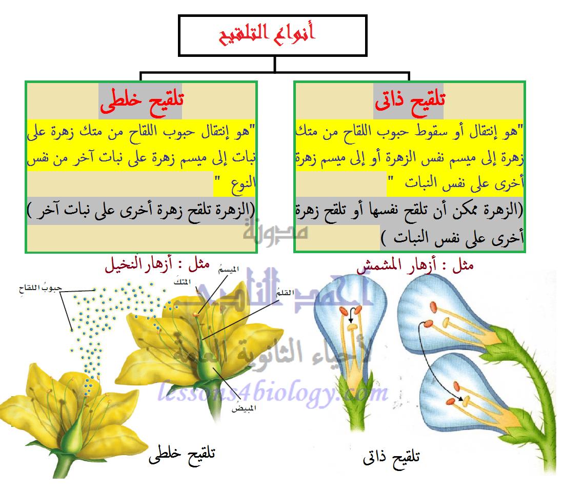 أنواع التلقيح فى النباتات الزهرية - خلطى - ذاتى