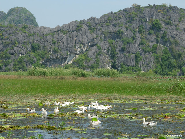 reserve van long ninh binh vietnam campagne baie halong terrestre bateau barque bambou sampan canards