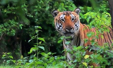 NHAI approves Rs 186 crore for wildlife mitigation in project