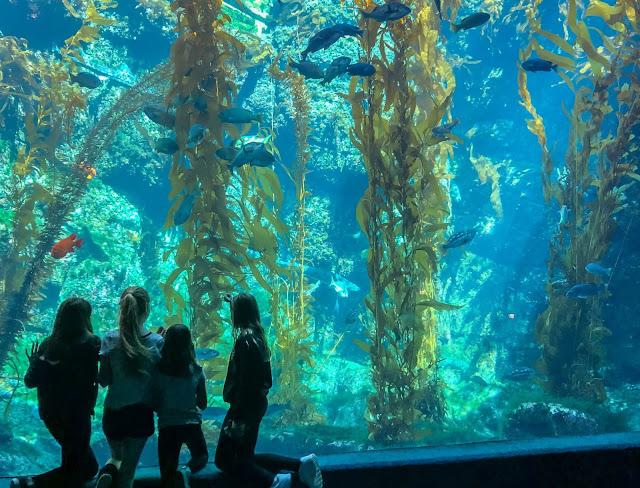 14 Best Aquariums in the USA: Birch Aquarium