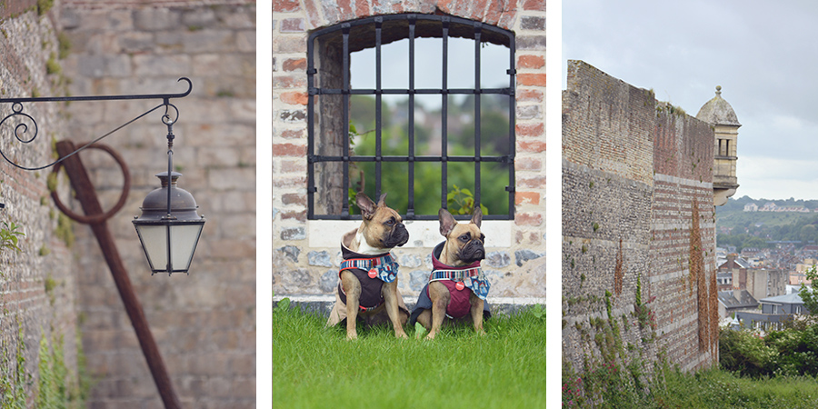 Hundbelog Genki Bulldog Burg Dieppe