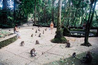 Ubud Monkey Forest  | Sunia Bali Tour