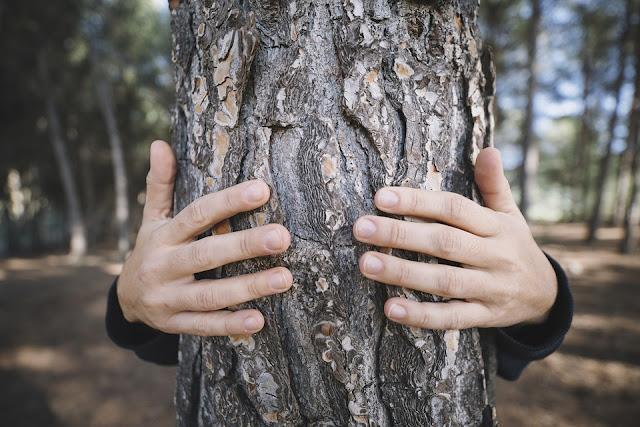 Tocando la madera