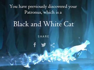 Gatto Bianco e Nero di Federica