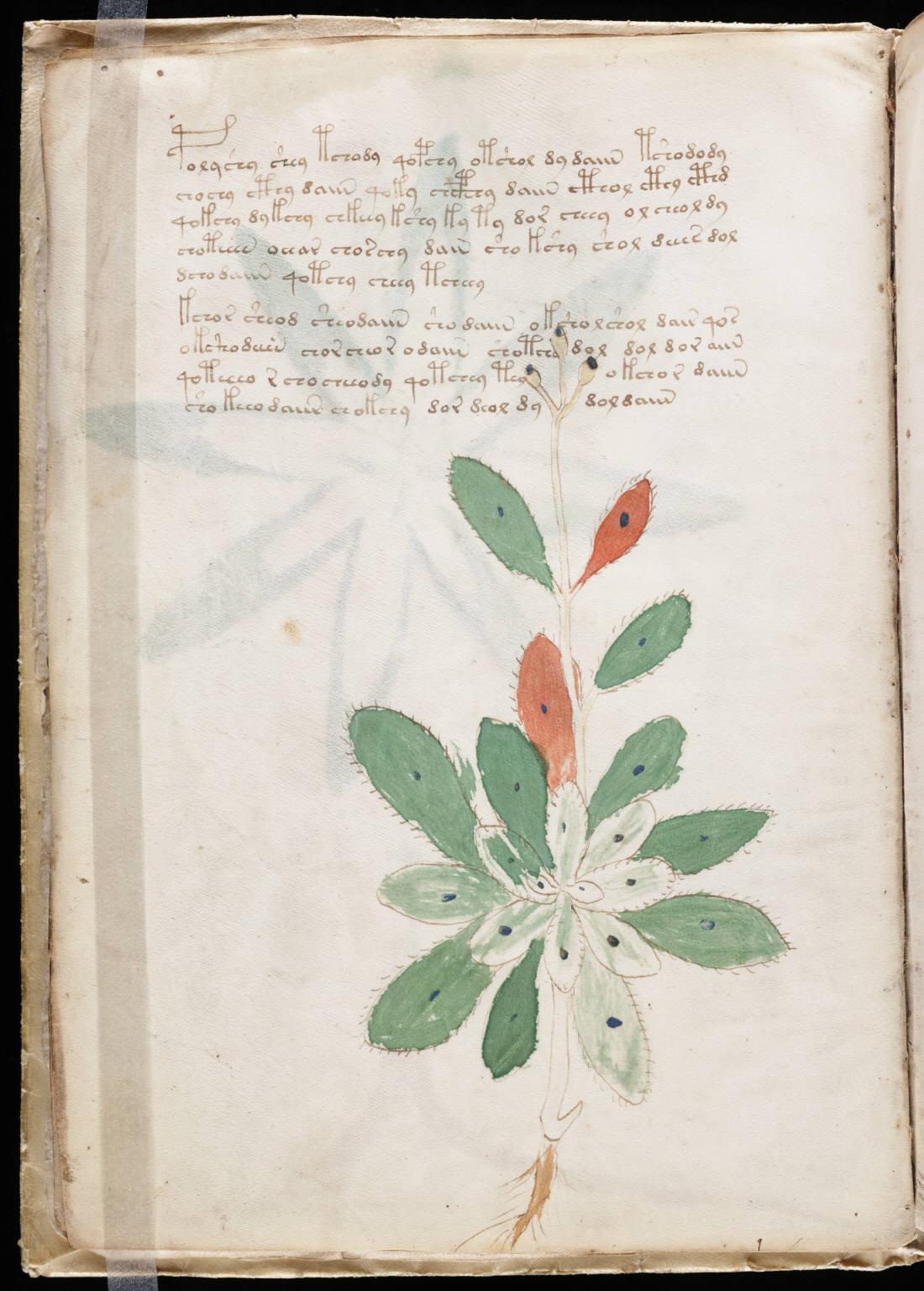 manuscrito016