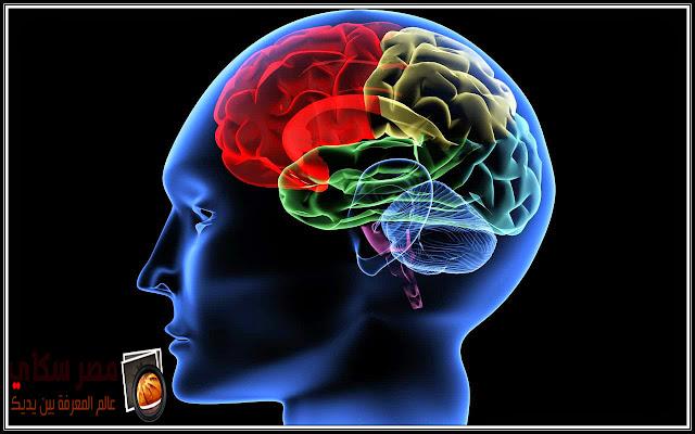 معلومات مثيرة عن الفص الأيمن والفص الأيسر من الدماغ Right - left lobe