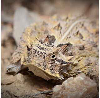 Tapayaxin dans son milieu naturel
