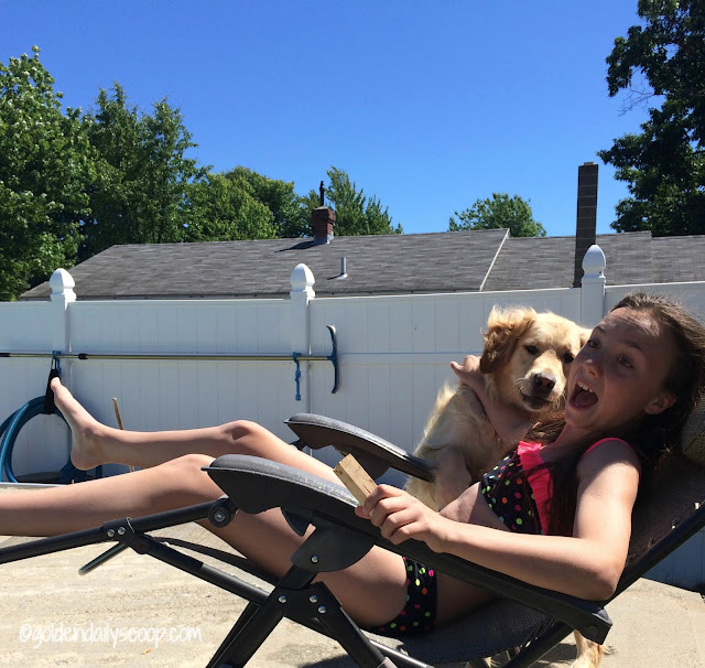 golden retriever dog jumping on chair #wordlesswednesday goldendailyscoop.com