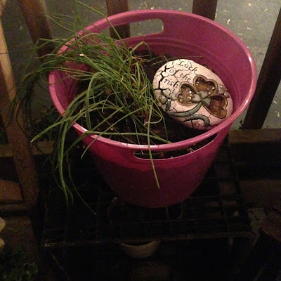 "Potted Chive and ""Luck of the Irish"" Stone Decoration in Herbal Container Garden"